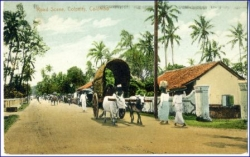 Ceylon, Sri Lanka, Colombo, Road Scene, Colpetty, 1914
