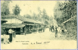 Ceylon, Sri Lanka, Colombo, Road to Mount Lavinia, gel. 1905