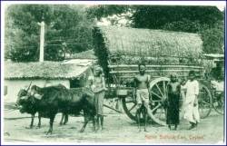 Ceylon, Nativ Bullock Cart, gel. 1911 --